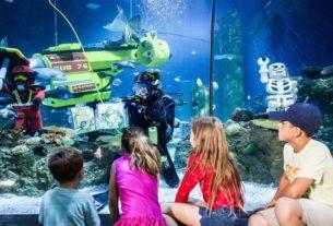 Sea Life Malaysia 02